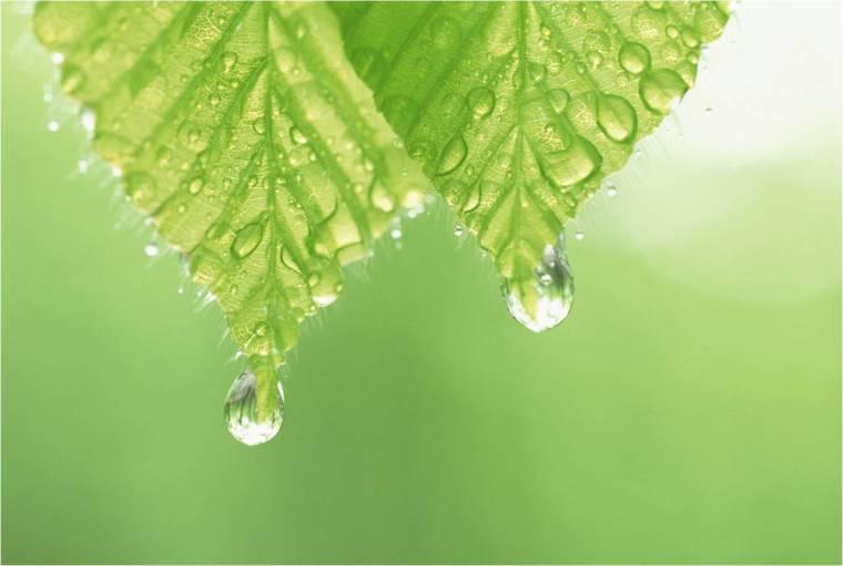 2aac-plant-oils